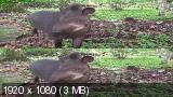 Очарование тропического леса / Fascination Rainforest (2012) BDRip 1080p   3D-Video   halfOU
