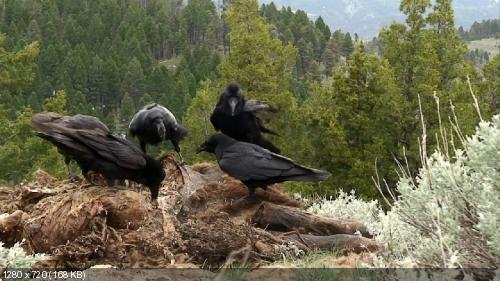 Дикий Запад / National Geographic: The Wild West (2013) 720p BDRip
