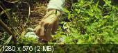 Осатаневшая / Bedevilled (2010) BDRip 720p