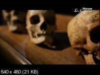 Как древние приматы эволюционировали в людей (2014) SATRip