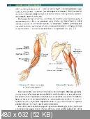 Брет Контрерас - Анатомия силовых упражнений с использованием в качестве отягощения собственного веса (2014)