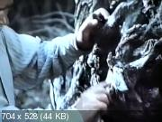 Сказка старого дуба (1984) VHSRip