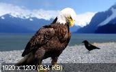 Обои-Мир животных #256