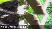 Дикие животные - животные тропиков 3D / Wild Animals 3D - Die Tiere der Tropen  Вертикальная анаморфная