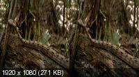 Скрытые миры: Пещеры Мертвых 3D / Hidden Worlds: Caves Of The Dead 3D (2013) BDRip 1080p 3D