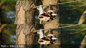 Остров лемуров: Мадагаскар 3Д / Island of Lemurs. Madagascar 3D ( by Ash61) Вертикальная анаморфная