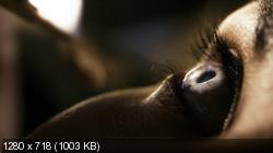 Спираль [S02] (2015) WEB-DL 720p | AlexFilm