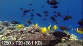 Дикие Гавайи. Тайны морских глубин / Wild Hawaii. Secrets of the Deep (Карен Гринфилд) (2013) BDRip 720p